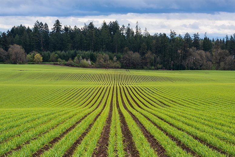 Бизнес идея - фермерское хозяйство