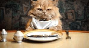 Навіщо вашому ресторану крауд-маркетинг