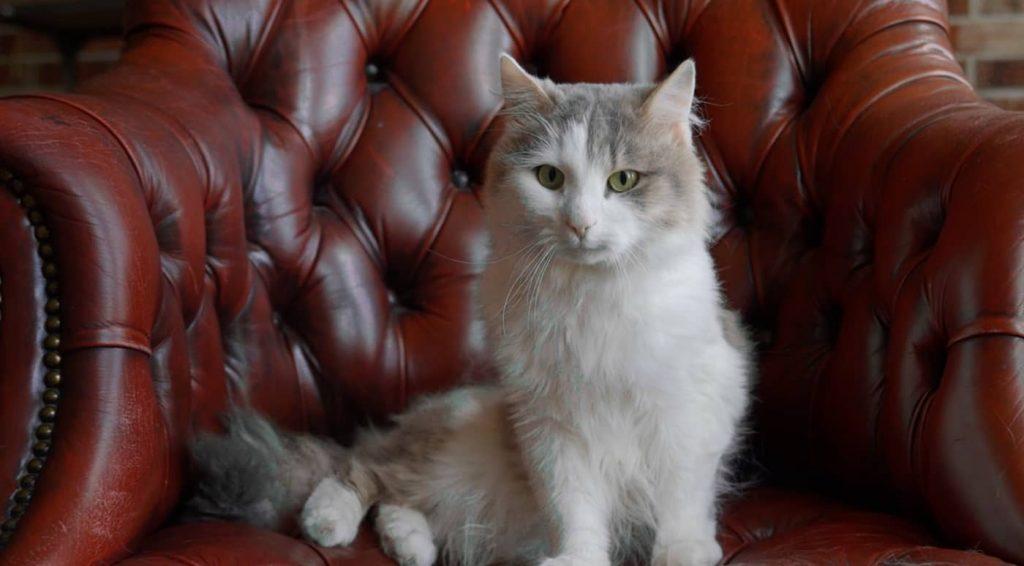 Кот холостяк